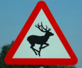 Residents urged to watch out for Deers on the Roads