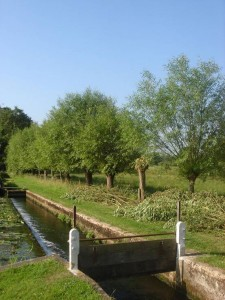 Pollarding-Mooring-Triggs Lock-2012