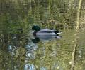 Sun dappled Moor Lane Pond