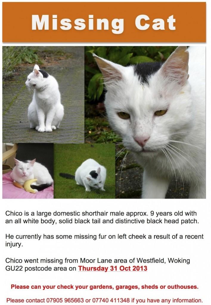 Chico-missing-2