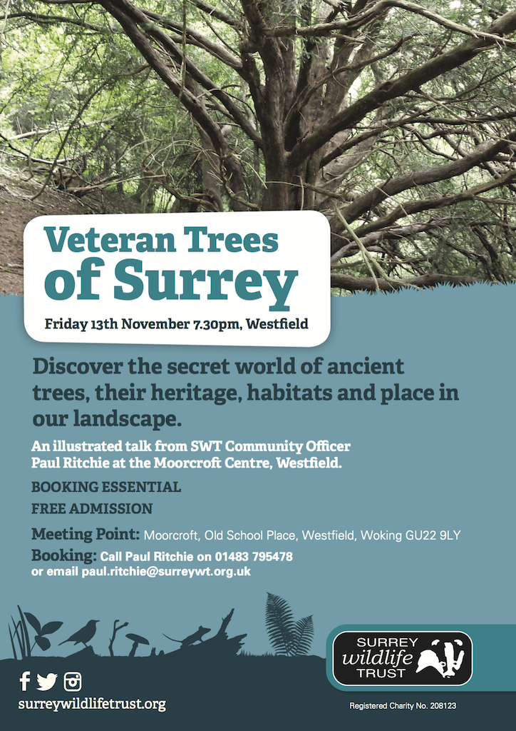 Poster - Veteran Trees of Surrey (Woking)